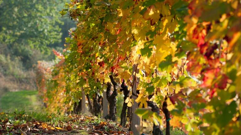 Monferrato in autunno