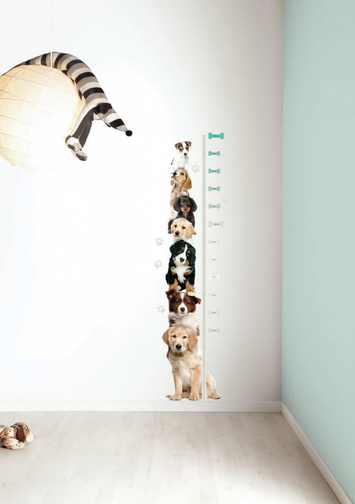 kek-amsterdam-misurazione-adesivo-xl-cuccioli-tard