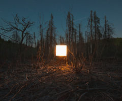Benoit Paille – tra natura e artificio