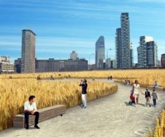 Un Campo di grano tra i grattacieli