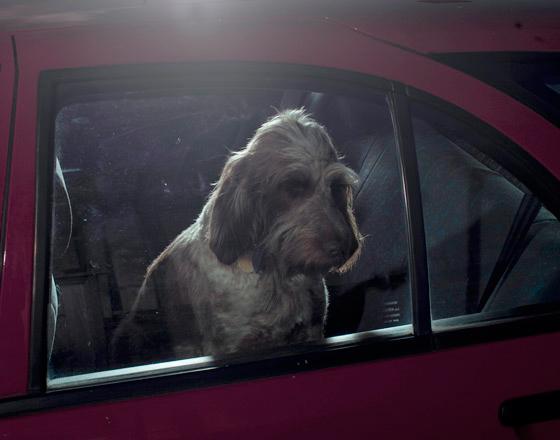 Martin_usborne-dog_1