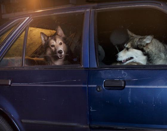 Martin_usborne-dog_12