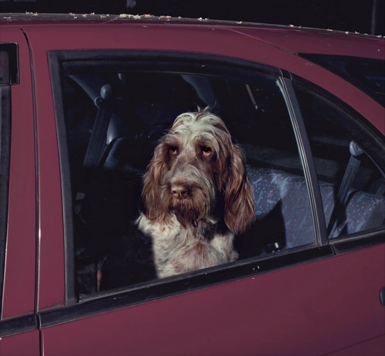 Martin_usborne-dog_3