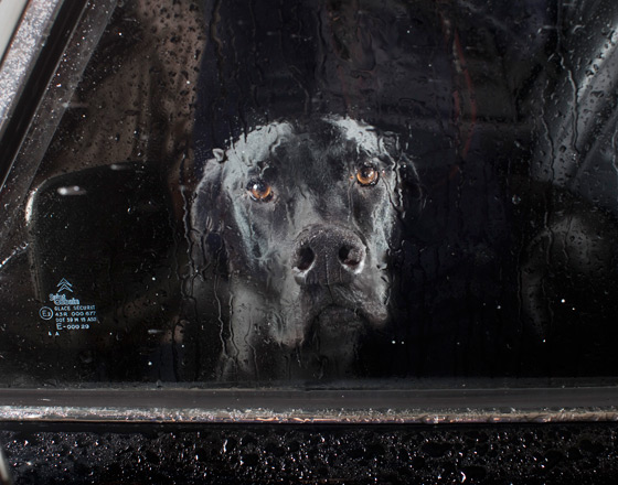 Martin_usborne-dog_5