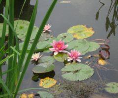 Il giardino impressionista di Monet