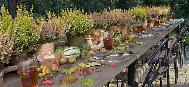 tavole d'autunno (15)
