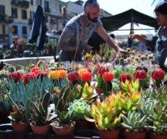 Primavera di fiori sui Navigli