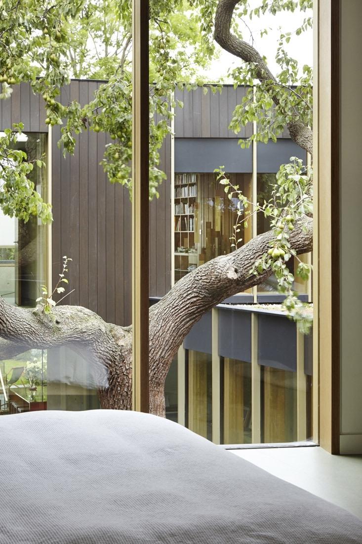 Pear Tree House, una casa progettata attorno ad un albero
