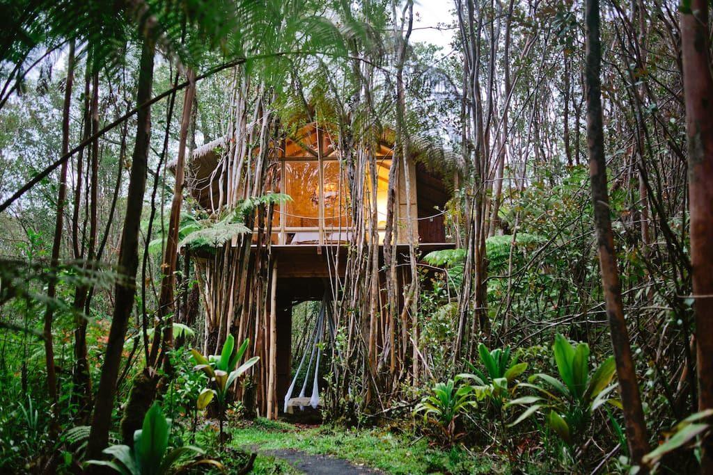 1 una casa sull'albero alle Hawaii