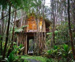 Airbnb series: una casa sull'albero nella giungla delle Hawaii