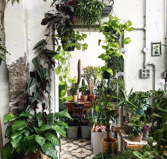 The Markham Kitchen Design Images On Pinterest: Forest Bathing E L'arte Di Curarsi Con La Natura