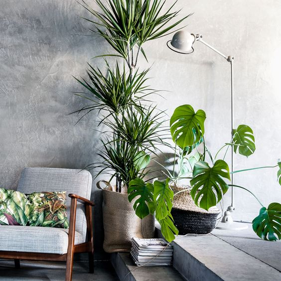 Decor tips pollice verde e arredamento in the mood for for Decoration urban jungle