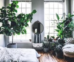 Get the look: un'esegerazione di piante per una casa che sembra una serra