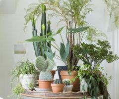 Get the look: la casa delle piante