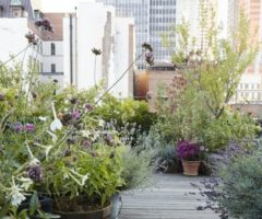 Go Green: un'oasi urbana
